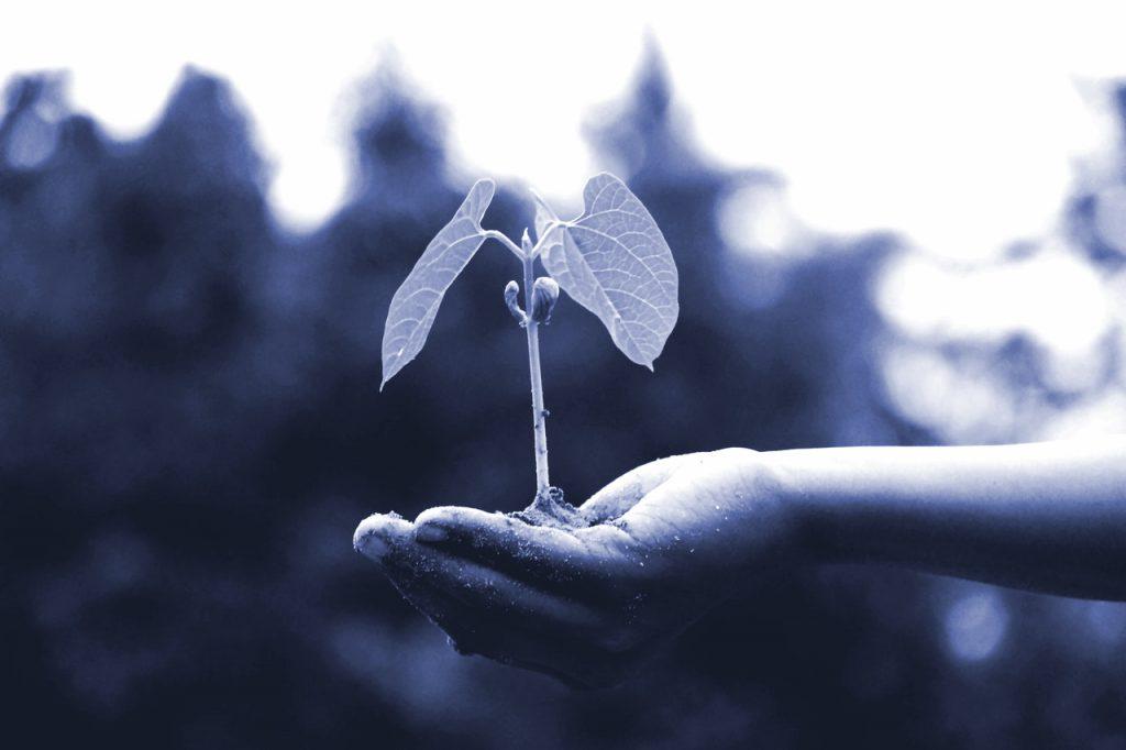 Symbolbild Lead Nurturing: Hand hält junge Pflanze